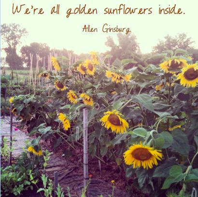 goldensunflowers